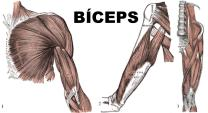 BICEPS-P